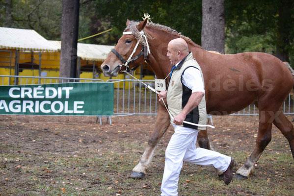 Concours Régional de chevaux de traits en 2017 - Trait COMTOIS - ERANIE DES RAYNAUDS - 12