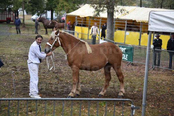 Concours Régional de chevaux de traits en 2017 - Trait COMTOIS - FRISBY DE GRILLOLES - 1