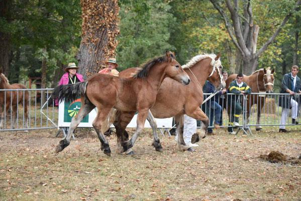 Concours Régional de chevaux de traits en 2017 - Jument & Poulain Trait COMTOIS - DIEZE DE GRILLOLES - 21