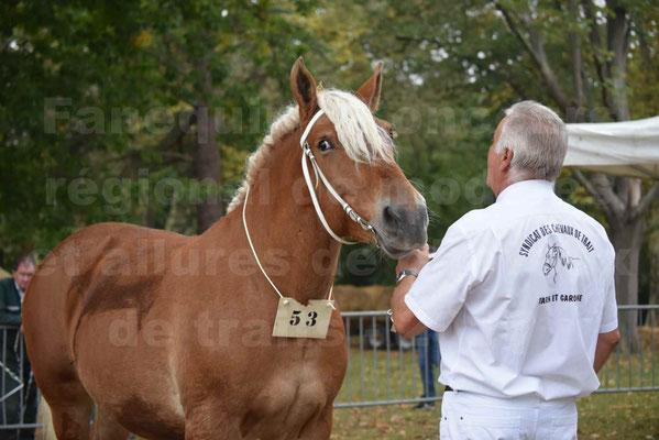 Concours Régional de chevaux de traits en 2017 - Jument & Poulain COMTOIS - BAILLA DU CLOS - 04