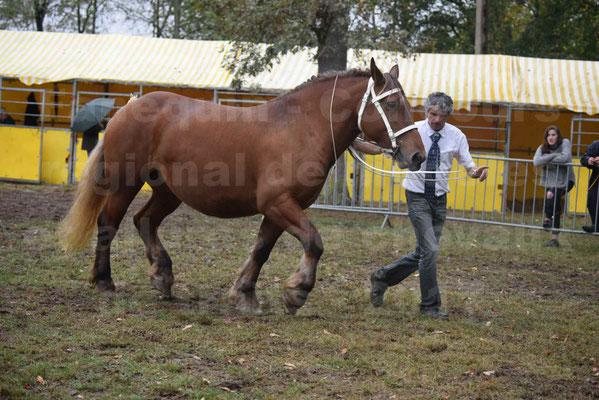 Concours Régional de chevaux de traits en 2017 - Trait COMTOIS - ESQUISSE DE VIELLE - 01