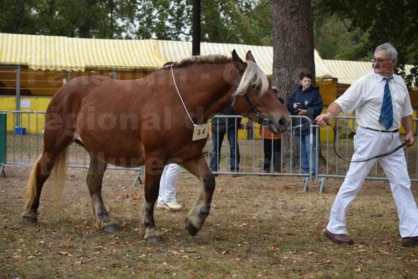 Concours Régional de chevaux de traits en 2017 - Pouliche Trait COMTOIS - DUCHESSE DE BENS - 02