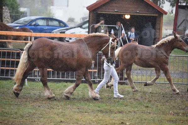 Concours Régional de chevaux de traits en 2017 - Trait COMTOIS - Jument suitée - ROXIE 7 - 06
