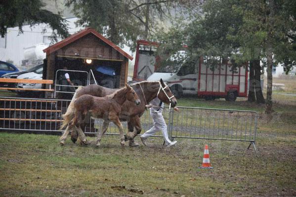 Concours Régional de chevaux de traits en 2017 - Trait COMTOIS - Jument suitée - RITA 38 - 07