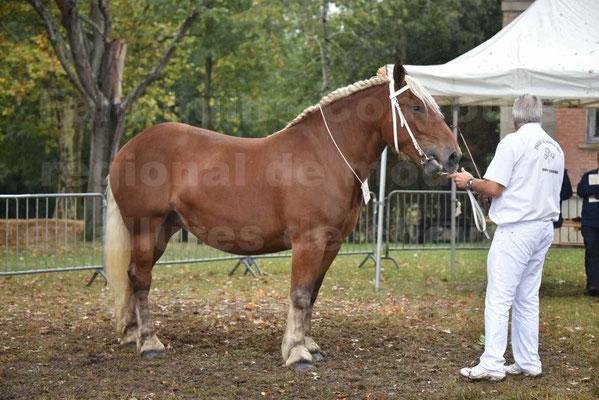 Concours Régional de chevaux de traits en 2017 - Trait COMTOIS - ELLIA DE FENEYROLS - 40