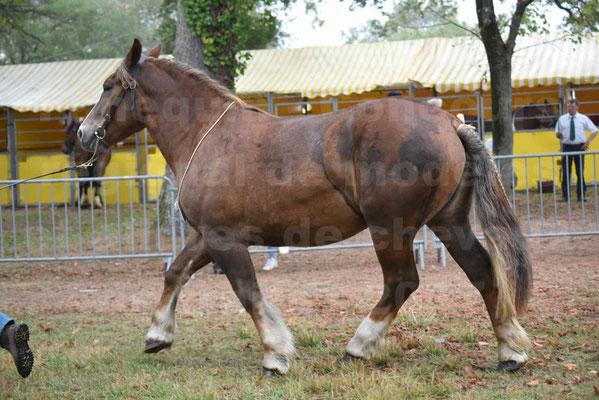 Concours Régional de chevaux de traits en 2017 - Trait BRETON - FINNE DE SAND - 12