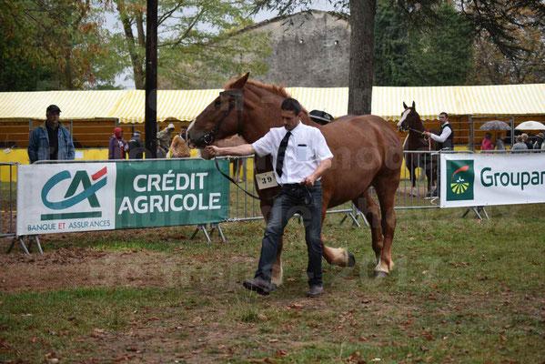 Concours Régional de chevaux de traits en 2017 - Pouliche Trait BRETON - ECLIPSE 53 - 01