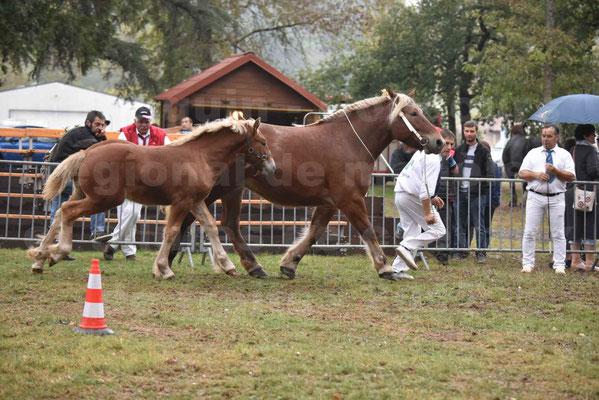 Concours Régional de chevaux de traits en 2017 - Jument & Poulain Trait COMTOIS - CHIPPIE 2 - 01