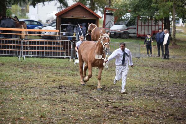 Concours Régional de chevaux de traits en 2017 - Trait COMTOIS - FRISBY DE GRILLOLES - 5