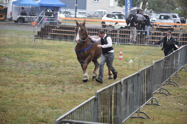 Concours Régional de chevaux de traits en 2017 - Pouliche trait BRETON - EPINE DE TELLEN - 20