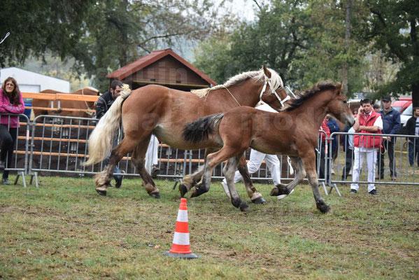 Concours Régional de chevaux de traits en 2017 - Jument & Poulain Trait COMTOIS - DIEZE DE GRILLOLES - 06