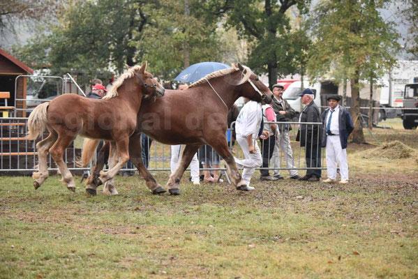 Concours Régional de chevaux de traits en 2017 - Jument & Poulain Trait COMTOIS - CHIPPIE 2 - 04