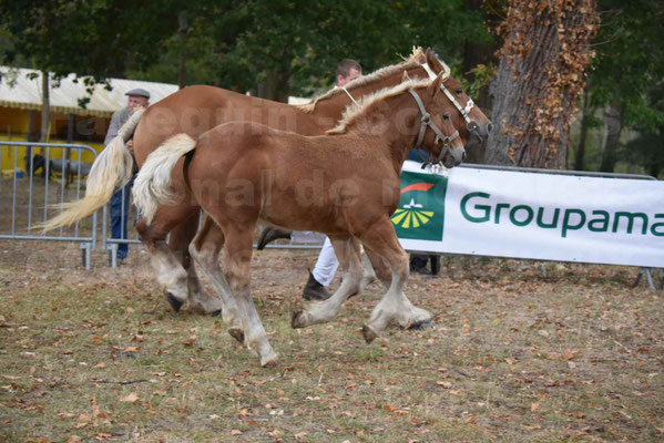 Concours Régional de chevaux de traits en 2017 - Jument & Poulain Trait COMTOIS - CANNELLE 9 - 23