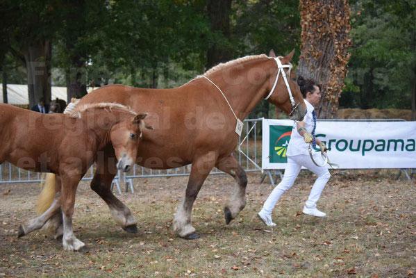 Concours Régional de chevaux de traits en 2017 - Jument & Poulain Trait COMTOIS - DANAEE DE CLAUMONT - 39