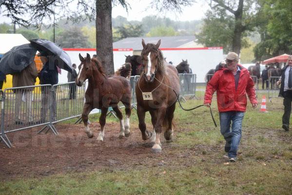 Concours Régional de chevaux de traits en 2017 - Jument Suitée - Trait BRETON - ULA DE BOUXOULIC - 09