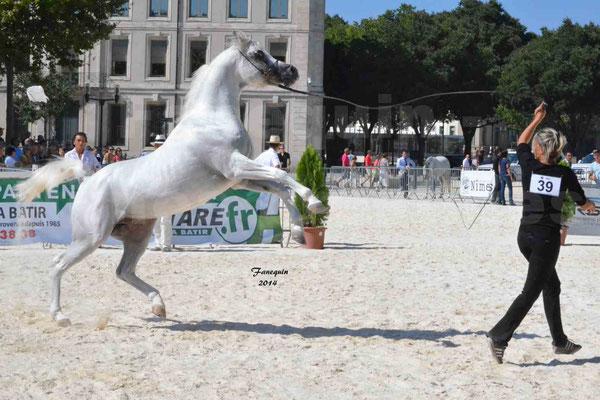 Concours national de Nîmes 2014 - ESTA ESPLANAN - Notre Sélection - 09