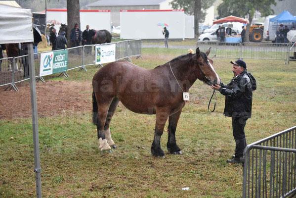 Concours Régional de chevaux de traits en 2017 - Trait BRETON  - EGLANTINE DE BENECHE - 07