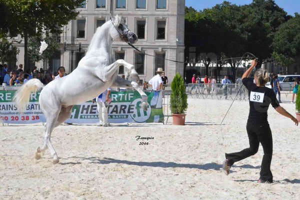 Concours national de Nîmes 2014 - ESTA ESPLANAN - Notre Sélection - 08