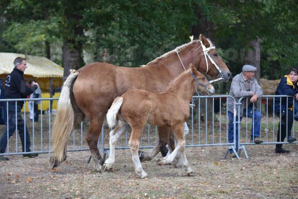 Concours Régional de chevaux de traits  en 2017- Jument & Poulain Trait COMTOIS - CANNELLE 9 - 01