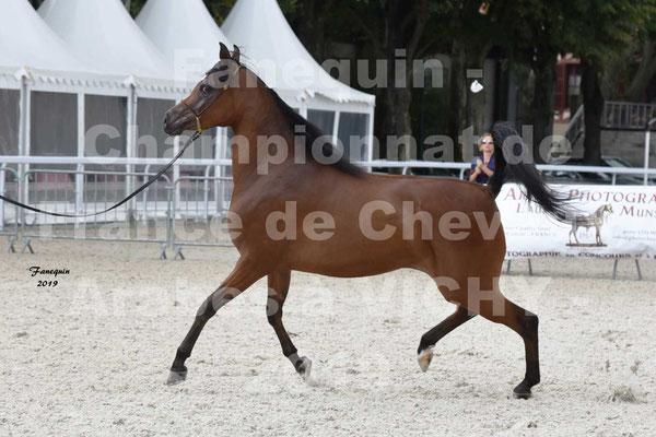 Championnat de France de chevaux Arabes à VICHY - MADONNA J