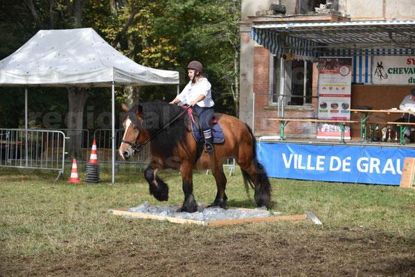 Concours régional de chevaux de traits 2017 - QUIQUINOU - 15