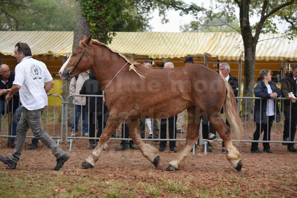 Concours Régional de chevaux de traits en 2017 - Trait BRETON - FLICKA 26 - 24