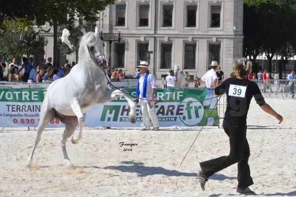 Concours national de Nîmes 2014 - ESTA ESPLANAN - Notre Sélection - 06