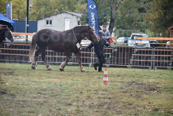 Concours Régional de chevaux de traits en 2017 - Jument Suitée - Trait BRETON - URIELLE DE LA MARGUE - 16