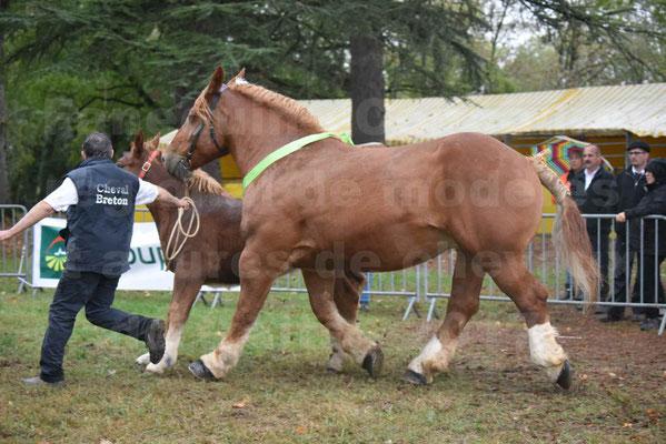 Concours Régional de chevaux de traits en 2017 - Trait BRETON - Jument suitée - ROYALE DE MARS - 14