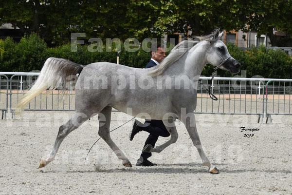 Championnat de France de chevaux Arabes à VICHY - ALPHA KALLISTE