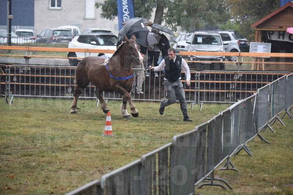 Concours Régional de chevaux de traits en 2017 - Pouliche trait BRETON - EPINE DE TELLEN - 17