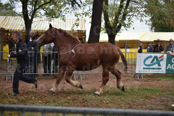 Concours Régional de chevaux de traits en 2017 - Pouliche Trait BRETON - EDEN DE LA GAUGE - 04