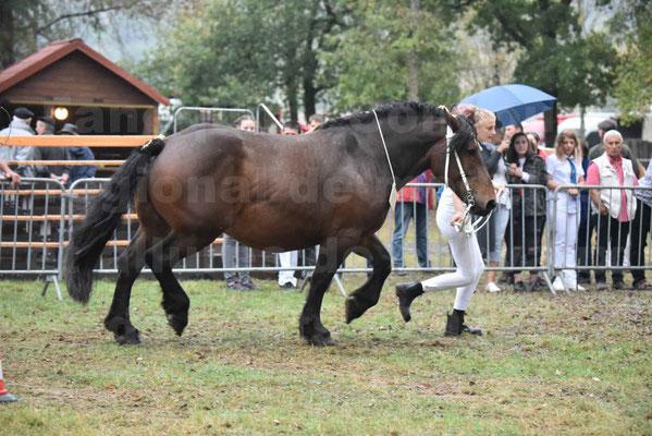 Concours Régional de chevaux de traits en 2017 - Jument & Poulain Trait COMTOIS - CANDY DE GRILLOLES - 13
