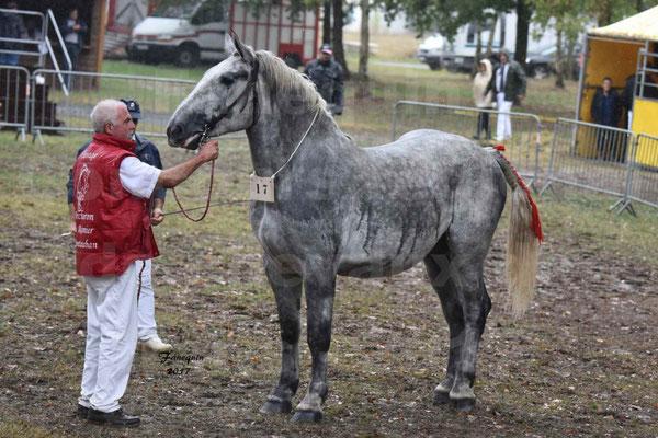 Concours Régional de chevaux de traits en 2017 - Trait PERCHERON - FRIANDISE DU RAMIER - 1
