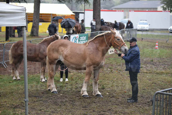 Concours Régional de chevaux de traits en 2017 - Trait BRETON - Jument suitée - OREE DES AMOUROUX - 01