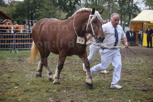Concours Régional de chevaux de traits en 2017 - Trait COMTOIS - ETOILE DES NAUZETTES - 11