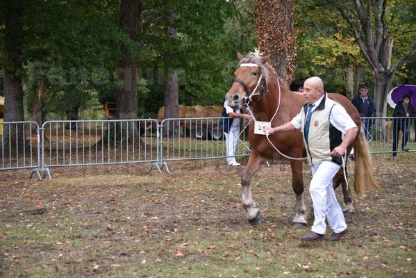 Concours Régional de chevaux de traits en 2017 - Trait COMTOIS - ERANIE DES RAYNAUDS - 08