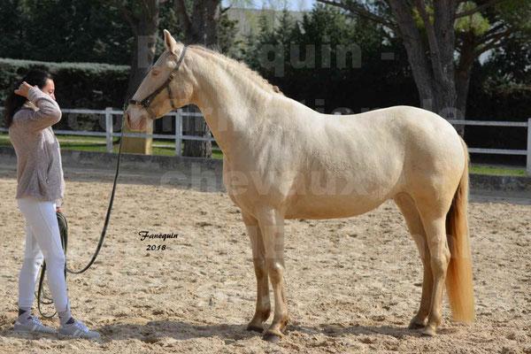 confirmation de chevaux LUSITANIENS Mars 2018 -