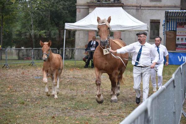 Concours Régional de chevaux de traits en 2017 - Jument & Poulain COMTOIS - ALLIANCE 3 - 18