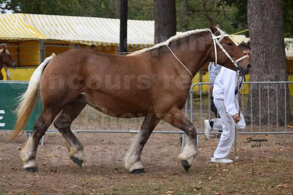 Concours Régional de chevaux de traits en 2017 - Jument & Poulain Trait COMTOIS - BESMA DE GRILLOLES - 03