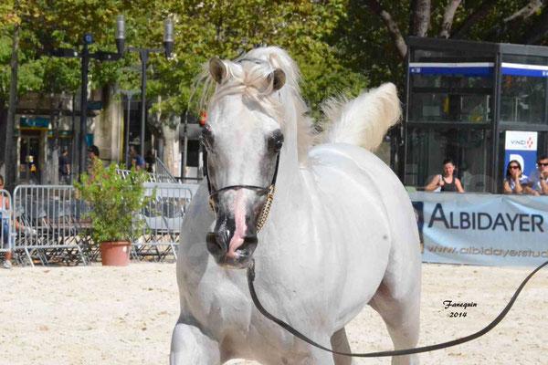 Concours national de Nîmes 2014 - ESTA ESPLANAN - Notre Sélection - Portraits - 07