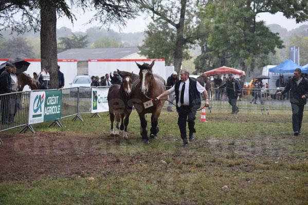Concours Régional de chevaux de traits en 2017 - Jument Suitée - Trait BRETON - UNION 11 - 14
