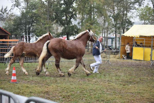 Concours Régional de chevaux de traits en 2017 - Jument Suitée - Trait COMTOIS - TOSCANE DE GIOUX - 07