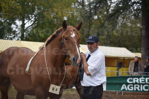 Concours Régional de chevaux de traits en 2017 - Jument Suitée - Trait BRETON - BEGONIA - 2