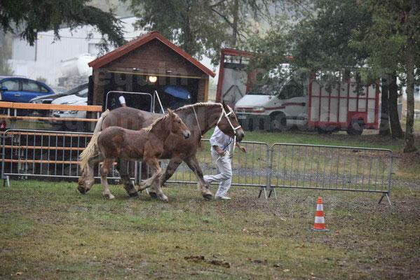 Concours Régional de chevaux de traits en 2017 - Trait COMTOIS - Jument suitée - RITA 38 - 06