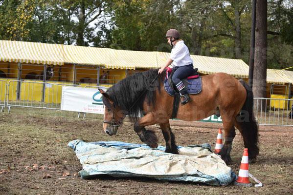 Concours régional de chevaux de traits 2017 - QUIQUINOU - 43
