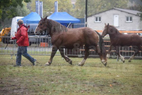 Concours Régional de chevaux de traits en 2017 - Jument Suitée - Trait BRETON - ULA DE BOUXOULIC - 02