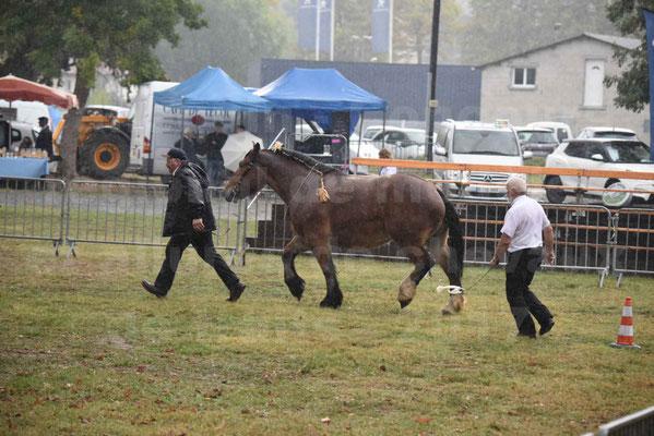 Concours Régional de chevaux de traits en 2017 - Trait BRETON  - EGLANTINE DE BENECHE - 10