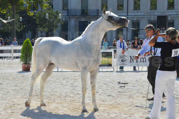 Concours national de Nîmes 2014 - ESTA ESPLANAN - Notre Sélection - 13