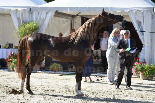 Championnat de France de Chevaux ARABES à Pompadour en 2017 - Notre Sélection - AVALON DALANN - 28